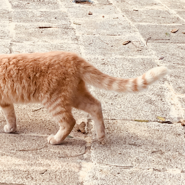A ginger cat walks across paving stones and out of shot.